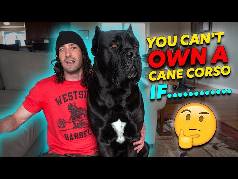 why-you-can't-own-a-cane-corso