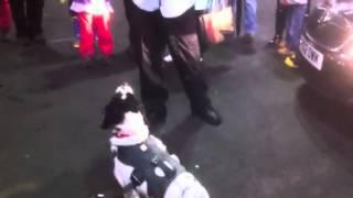 K9 Fire Investigation Dog Unit