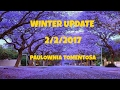 ⟹ EMPRESS TREE | Paulownia Tomentosa | Fastest growing tree, winter update
