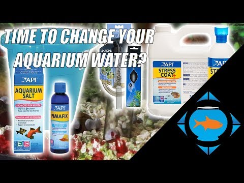 How to do a Water change and clean your aquarium gravel