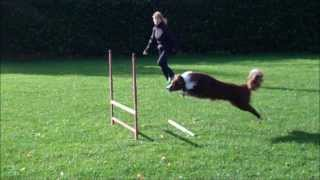 Gymnastics in dog agility Thumbnail