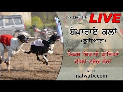 BOPARAI KALAN (Ludhiana) GREYHOUND TRACK RACES [17-Mar-2019] 🔴 LIVE STREAMED VIDEO 🔴
