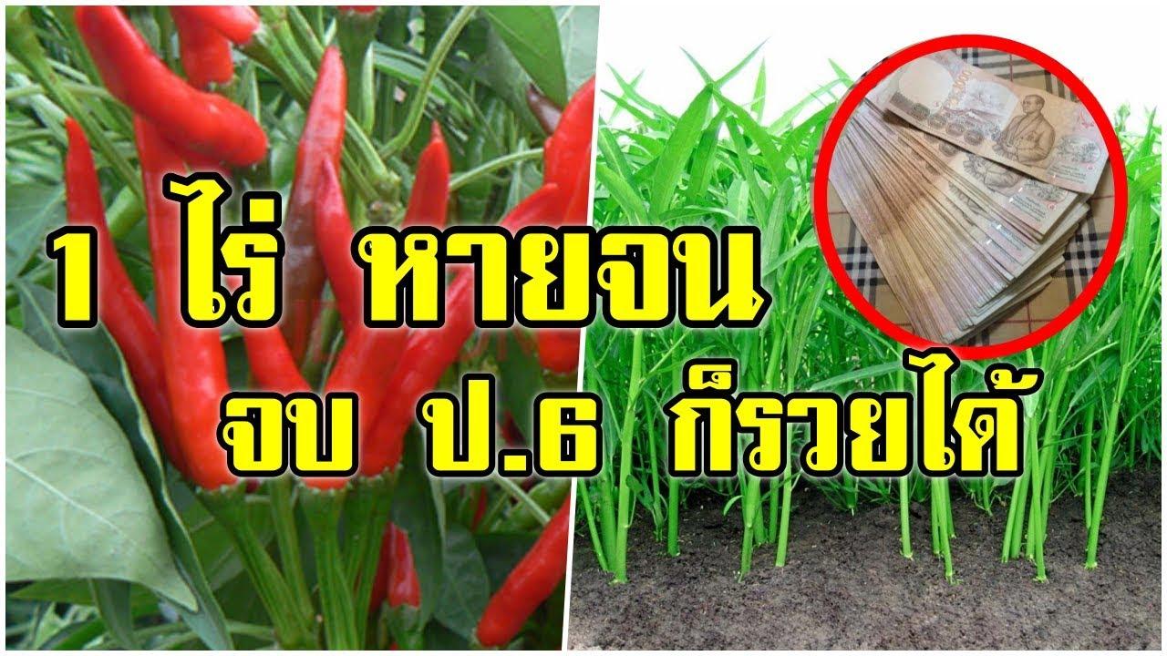 จบ ป.6 ก็รวยได้ ทำเกษตร 1 ไร่ หายจน เปลี่ยนชีวิตอย่างยั่งยืน