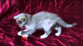 Голубой плюшевый котенок
