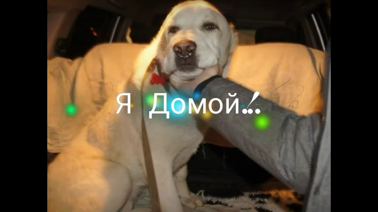 Кот Филя 8 кг!!!! - YouTube