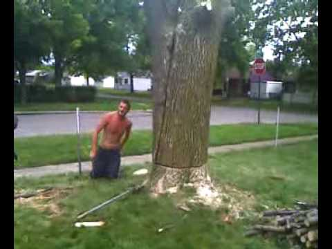 D I Y Tree Felling Dont S Youtube