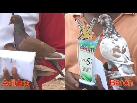 Lomba besar merpati kolongan TVRI CUP 1 Bandar Lampung