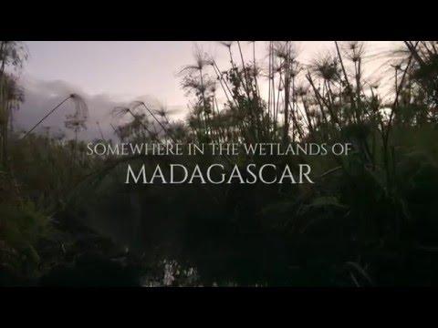 TEASER: ALAOTRA - Endangered Treasures of Madagascar (2017)