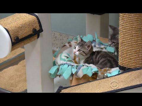 New Calif. law bans sale of animals from breeders in pet stores