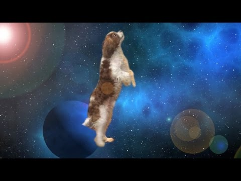 Apollo The Dog Travels Through Space & Time - Shooting Stars Meme