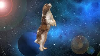 Apollo The Dog Travels Through Space & Time - Shooting Stars M…