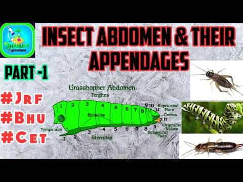 Insect Abdomen & Their Appendages | Part-1 Pre Genital & Post Genital | Insect Morphology