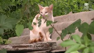 Жительница Черкесска отдаст в добрые руки 200 кошек