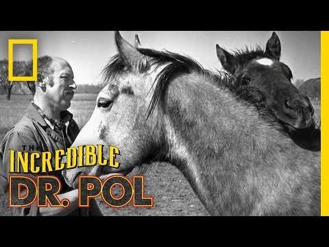 The Pol's Go 80's!  The Incredible Dr. Pol