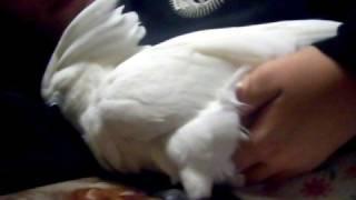bella laying an egg part 1