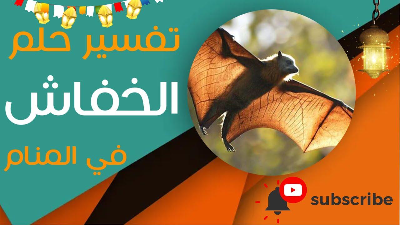 تفسير حلم الخفاش - ما معنى رؤية الخفاش في المنام؟