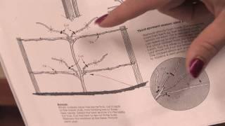 Gardening Tips : How to Prune Berries