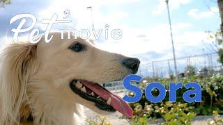 ペットムービー Sora ver2 Pet'movie PV