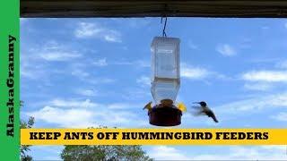 Keep Ants Off Hummingbird Feeders