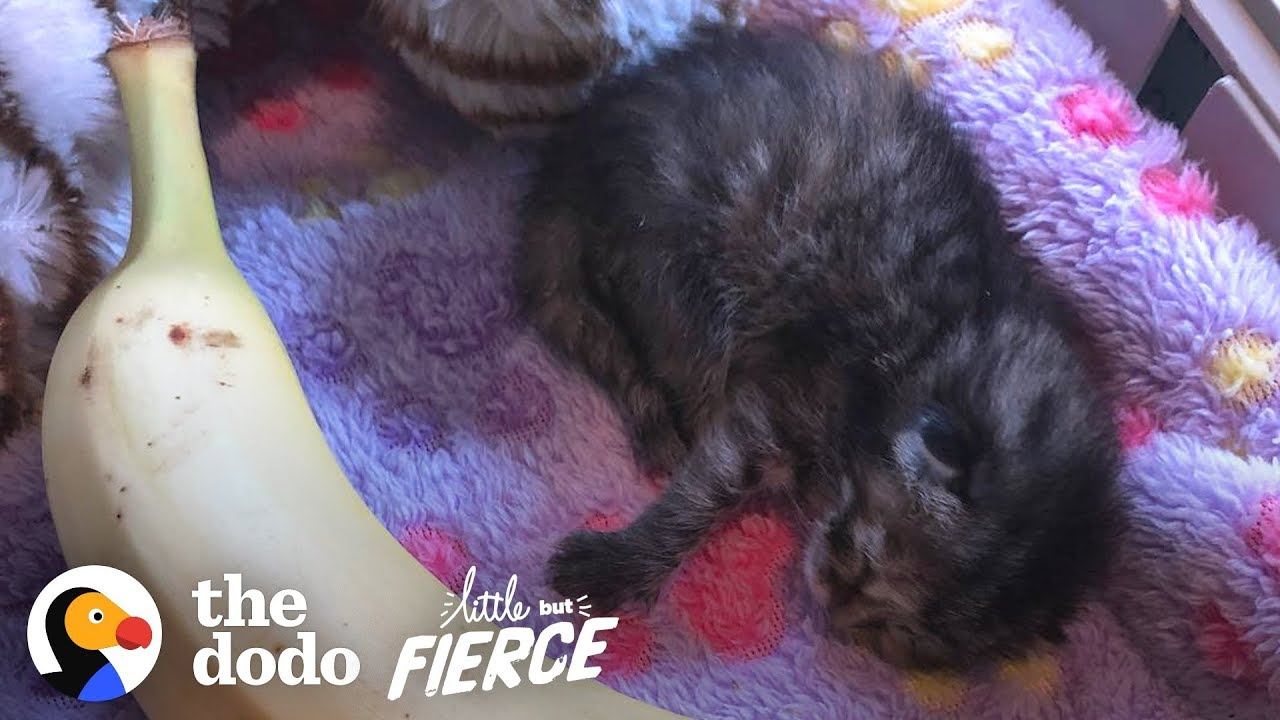 Watch A 3-Day-Old Kitten Grow Up So Big And CUTE   The Dodo Little But Fierce