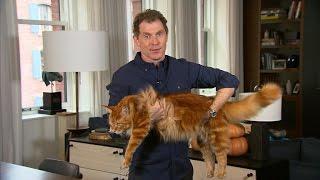 Bobby Flay's cat love