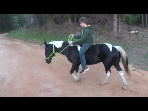 Beautiful Horse For Sale: Black And White Paint Mare, 12 Years Old And Gentle