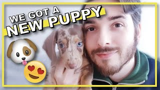 WE GOT A PUPPY!  Bringing home our adorable 8 week old miniature dachshund, Harry.