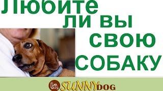 Любите ли вы свою собаку по настоящему  Как вывыражаете любовь к своей собакой