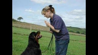 Дрессировка собак. ТОР-6 команд, которые должна уметь собака.