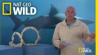 Q&A: Surviving a Shark Encounter | Shark Attack Experiment Live!