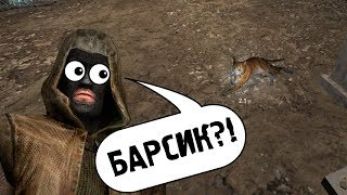 НОВЫЙ БАР И КОТЫ В STALKER CALL OF CHERNOBYL