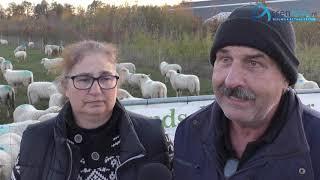 Eigenaren schaapskudde Witterveld in Assen: 'Dit is onze grootste nachtmerrie'