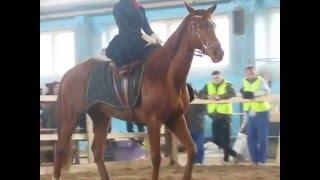 Horse show Minsk march 2016 | Выставка лошадей Минск Март 2016 - Езда в дамском седле