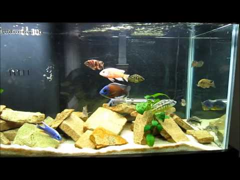 Beginner's Guide To Identifying African Cichlids