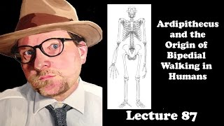 Lecture 87 Ardipithecus  and the  Origin of  Bipedial  Walking in  Humans
