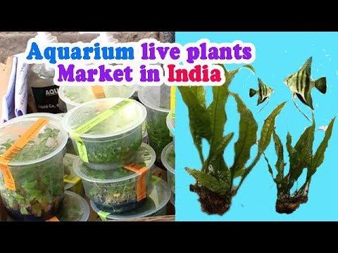 Biggest Aquarium Aquarium Fish Market In India Part 4 Live