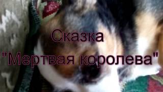 """Говорящая собака Мила рассказывает сказку  """"Мертвая королева"""""""