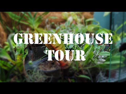 Tropical plant greenhouse tour! (May 2018)