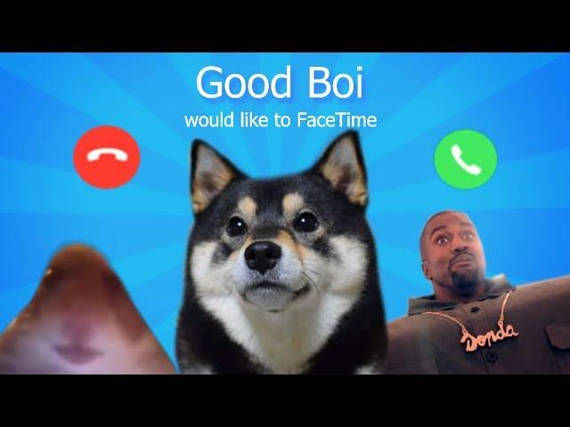 Doggo would like to FaceTime