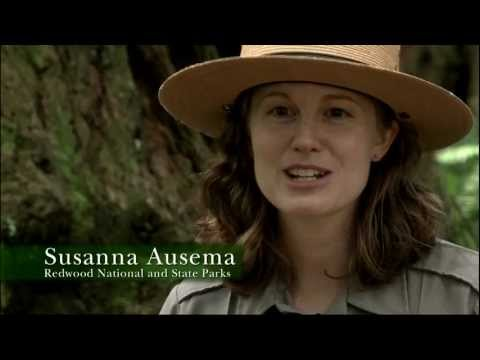 Redwood National Park Ranger Talk