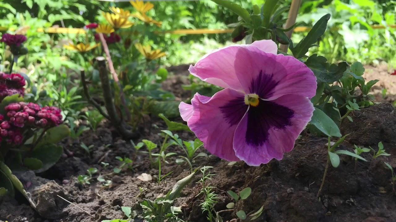 """Проект """"Весенняя Стопаптека"""" закрыт, а цветы до сих пор ещё зацветают!"""