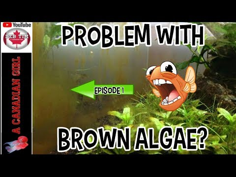 BROWN ALGAE WHAT IT IS AND HOW TO KILL IT EP1