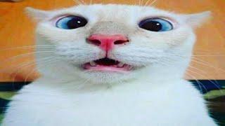 Video Lucu Kucing Kocak Bikin Ketawa Abis