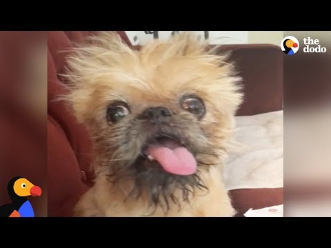 'Ugliest' Rescue Dog Finds A Mom Who Just Gets Her | The Dodo