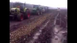 Экстримальная уборка сахарной свеклы в Краснодарском крае.