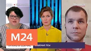 """""""Прямо и сейчас"""": стая собак набросилась на ребенка в Подмосковье - Москва 24"""