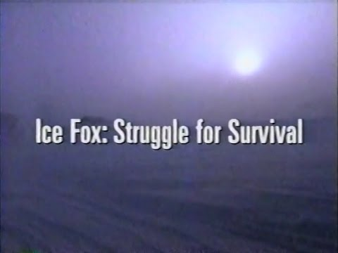 Ice Fox: Struggle for Survival (1993)