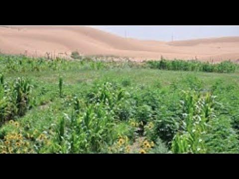 ¡CHINA Verwandelt Seine Wüsten In Fruchtbares Land!