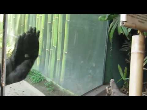 Monkey Throws Poop Youtube