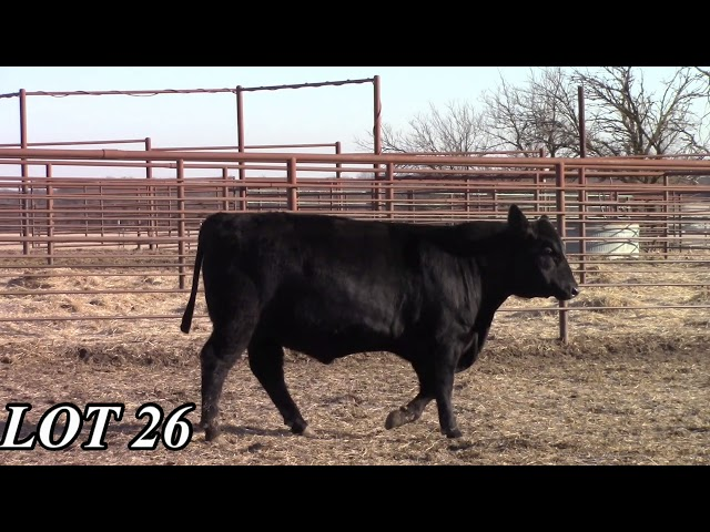 Mead Angus Farms Lot 26